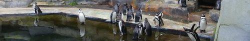 Avis sur le Parc Zoologique de Paris