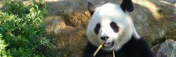 Photos Beauval Zoo