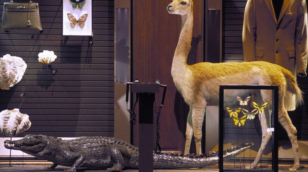 Crocodile et lama, espèces conservées, espèces exploitées - La planète aujourd'hui © MNHN  Bernard Faye