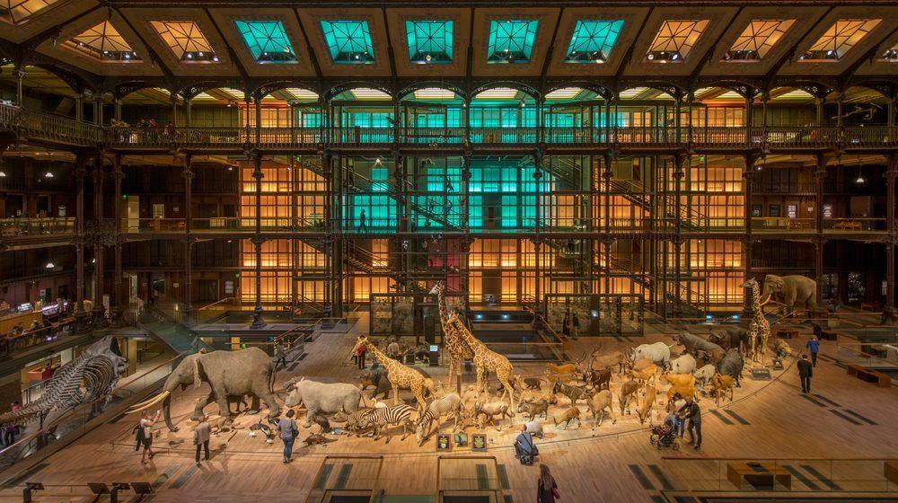 Grande Galerie de l'Evolution illuminée