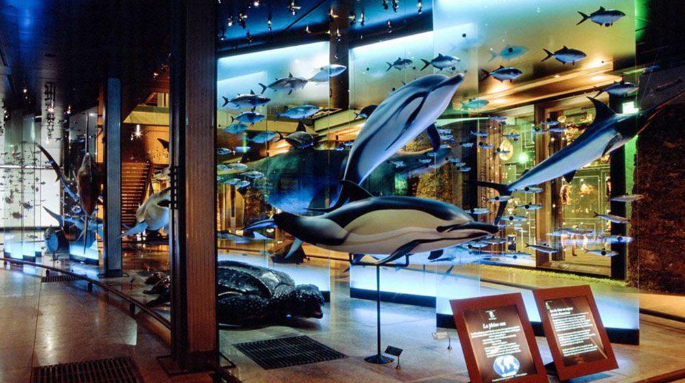 Grande Galerie de l'Évolution - Milieu marin © MNHN - Laurent BessolGrande Galerie de l'Évolution - Milieu marin © MNHN - Laurent Bessol